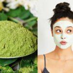 daun kelor untuk kecantikan wajah