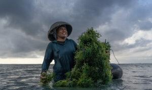 petani rumput laut Indonesia