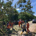 bersihkan pohon