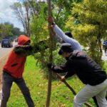 pohon rusak